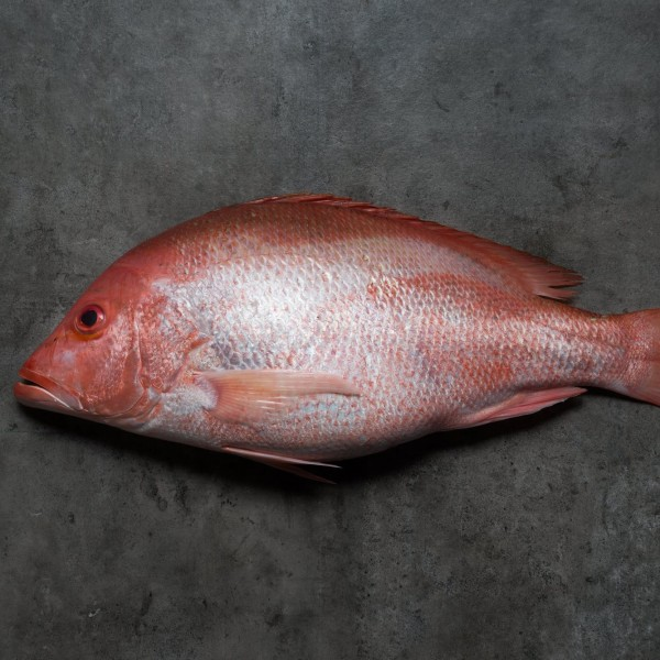 FRESH WHOLE RED SNAPPER (500G)